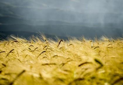 外媒:中国农业转型模式为发展中国家提供范本