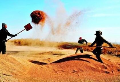 中国农民丰收节晒出了5个100