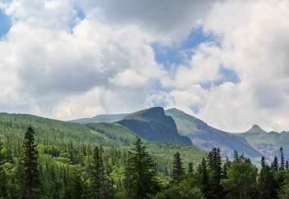 我省深入推进长白山林区森林生态修复,计划实施造林更新1.5万亩