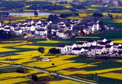 实现美丽乡村建设与高质量发展相得益彰