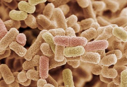 我国研究人员首次在大肠杆菌中成功实现维生素B12的从头合成