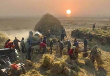 第二批100个全国新型职业农民培育示范基地名单公布 吉林省这三家企业入选