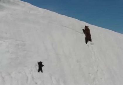 还记得刷爆朋友圈的小熊爬山视频吗?竟然是被无人机吓坏坠崖