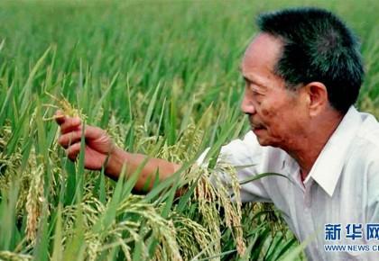 """一颗稻谷的""""中国贡献""""——袁隆平的追梦路"""