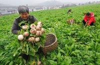 农业农村部:今年农民人均纯收入预计超过14600元