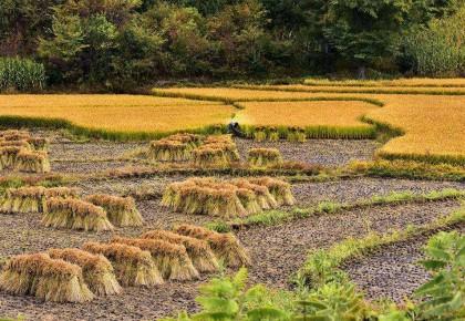 国家统计局:今年全国粮食总产量65789万吨