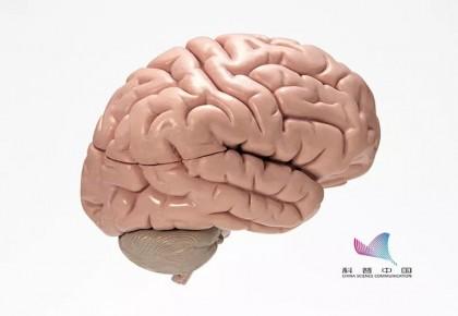 通過手勢動作判斷大腦老化程度,朋友圈熱傳的方法靠譜嗎?