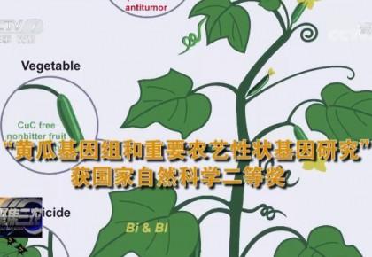 破解黃瓜基因密碼!農業領域多項成果獲國家科學技術獎勵