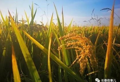 長春市今年重點推廣15項種植技術