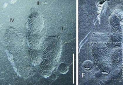 古生物学家发现世上最袖珍恐龙足迹化石