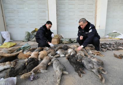 """森林公安查获野生动物4857只 这些""""野味儿""""吃不得……"""