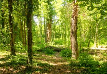 2018年我国共完成造林707.4万公顷
