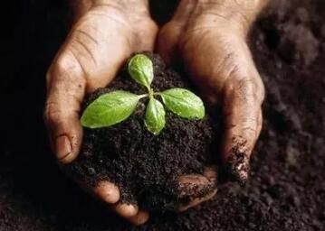 正在公示!万博手机注册省6县市将获2019年增施有机肥试点补贴