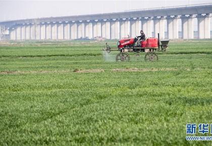 绿色点染希望的田野——全国春耕生产形势综述
