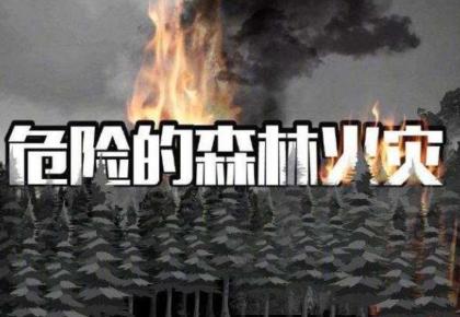 """凉山森林火灾救援中发生的""""林火爆燃""""是什么?"""