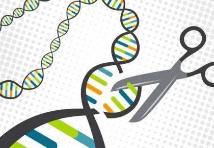 """中国开发出新型""""基因剪刀""""载体"""