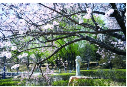 """长春世界雕塑公园花香四溢 万尊雕塑""""醉""""花海"""