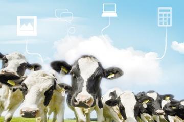 AI的风吹到养殖业 除了提质增效,还能解放人手