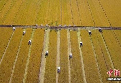 两部委发布重点强农惠农政策:补贴玉米大豆生产者