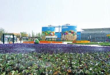 """""""每一个细节都展示中国绿色发展的努力""""——专访北京世园会规划阶段总负责人胡洁"""