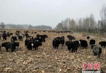 农业农村部:不得截留套取和冒领农牧民补助奖励资金