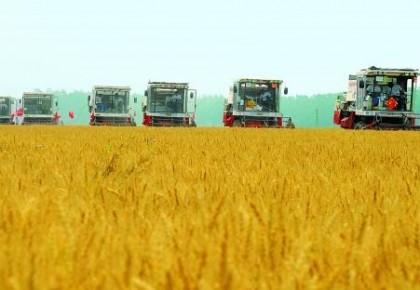 农业农村部:夏粮实现恢复性增产 丰收已成定局