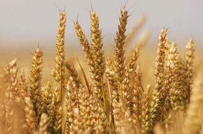 """""""优质粮食工程""""实施3年来硕果累累 助粮食产业高质量发展"""