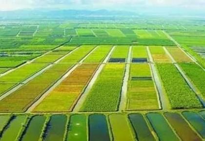 夏粮丰收已成定局 农村消费持续活跃