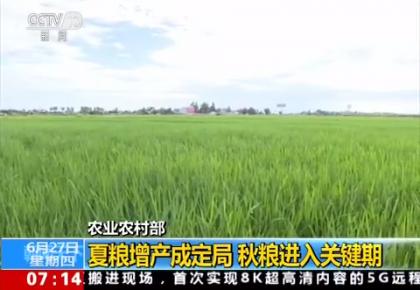 农业农村部:夏粮增产成定局 秋粮进入关键期