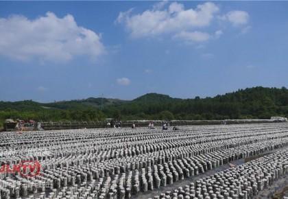 年销售额8200万!靖宇县这个扶贫电商品牌为啥这样牛?