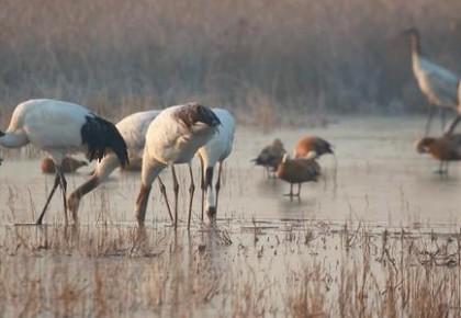 黄(渤)海候鸟栖息地(第一期)正式列入世界遗产名录