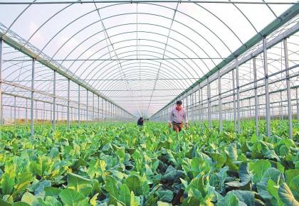 万博手机注册省拟定10个省级特色农产品优势区!为家乡农产助力!