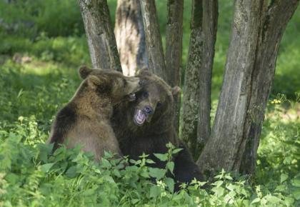 AI大数据赋能野生动物保护