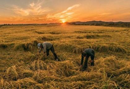 吉林省5名農民攝影家作品入選全國攝影展