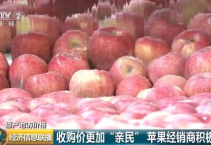 好消息!苹果丰收了,咱买便宜了!果农也不赔了!