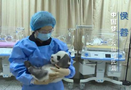 【中国梦·大国工匠篇】侯蓉:十余年只做一件事 培育大熊猫