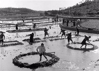 中国如何以不到世界9%的耕地,养育了世界近五分之一的人口 | 礼赞70年