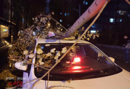 """大风刮倒树,行驶中的出租车""""无辜""""遭殃......"""