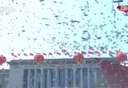 國慶盛典上放飛的7萬只鴿子,最后都飛哪去了?