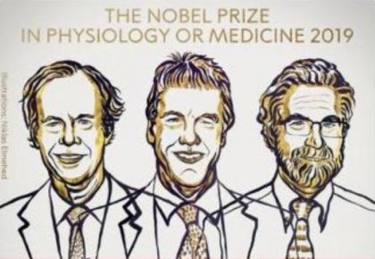 2019年诺贝尔生理学或医学奖揭晓 3位科学家获奖