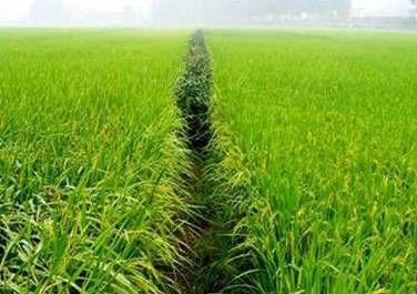 四部門:2022年基本建成功能完善的多層次農業保險體系