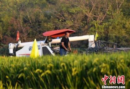 第三代杂交水稻首次专家测产 衡南基地平均亩产1046.3公斤