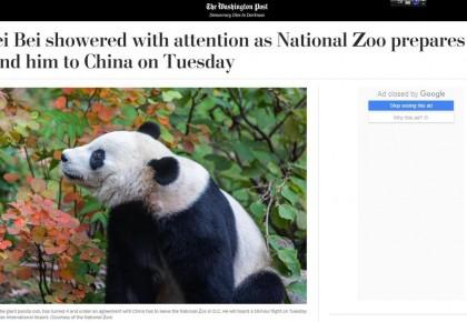 【中国那些事儿】旅美熊猫贝贝回国 美国粉丝:我们会很想念贝贝 熊猫外交请继续