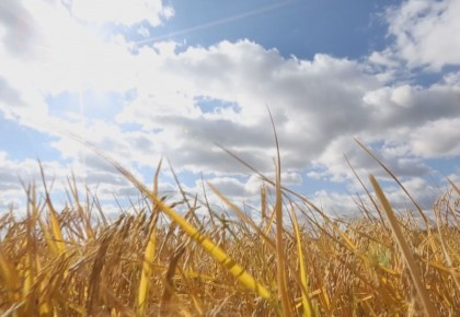 最是一年好时光·丰收在吉丨延吉:农民喜收丰收粮
