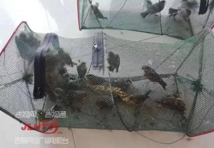 非法捕捉贩卖野生鸟类 两名嫌疑人被抓获