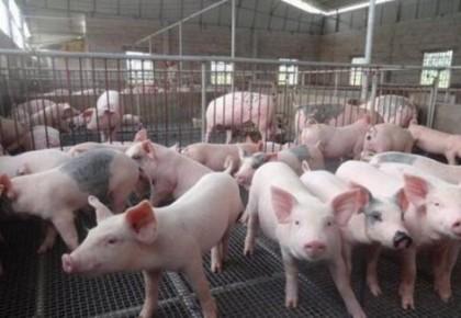 农业农村部召开九省区市生猪生产调度会 要求全力推动生产恢复