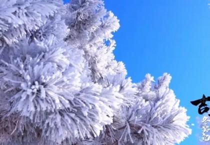 吉林冬游记 丨吉林市迎今冬首场大范围雾凇景观,每一帧画面都美醉了~