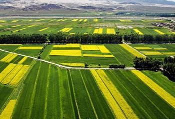既管当前又管长远,增强农民发展生产信心 土地承包关系长久不变是重大宣示(政策解读)