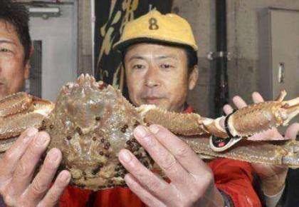 刷新吉尼斯纪录!日本一只螃蟹拍出32万元