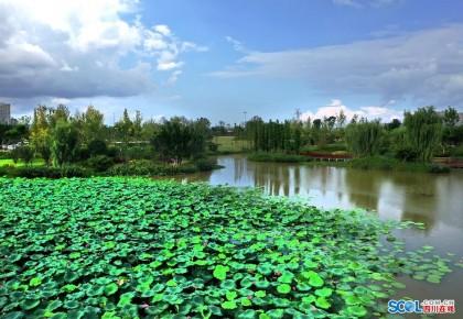 """【生态文明@湿地】""""海绵城市""""遂宁:城市湿地串起26公里绿丝带"""